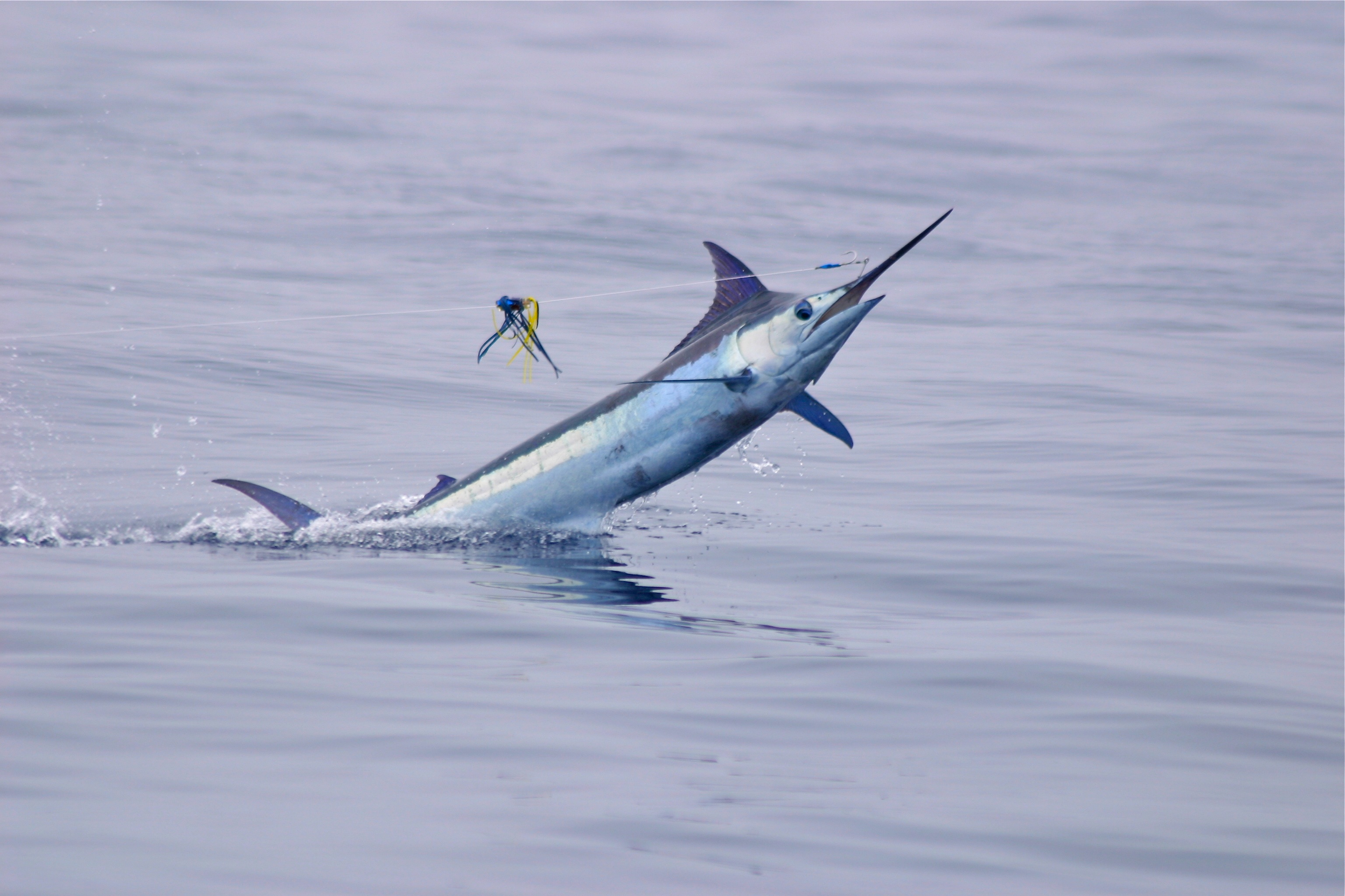 Say Aloha To Fishing In Hawaii Deep Sea Fishing Info